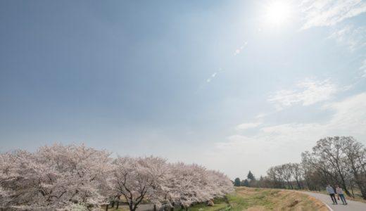 ゴールデンウィーク(北海道)は桜を見に行こう!おすすめスポットまとめ