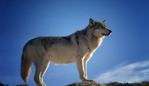 オオカミちゃんには騙されないで月LINEを使ったのは誰?予想と結果!